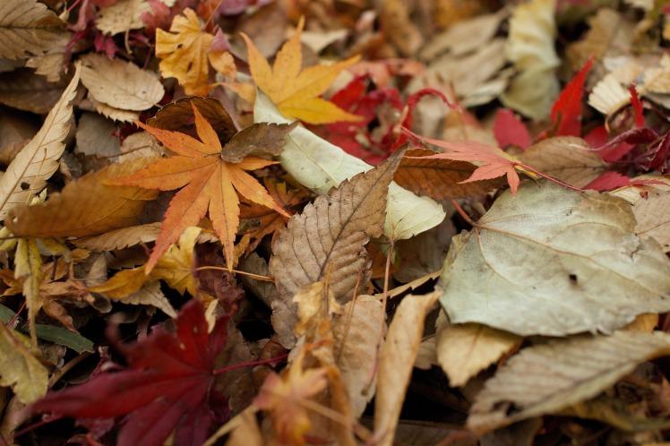 leaves-984544_1920